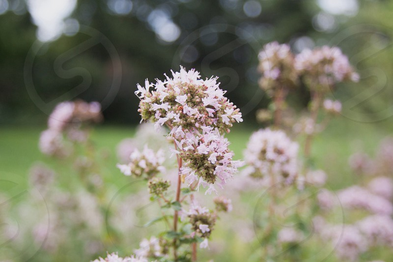 white flowers in the grass field photo