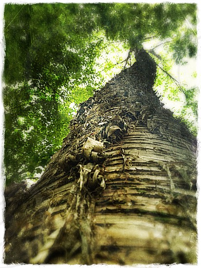 brown tall tree low angle view  photo