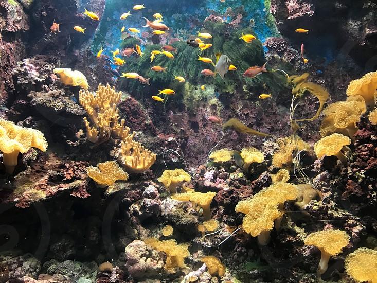 Exhibition at Phuket Aquarium in Phuket Thailand photo