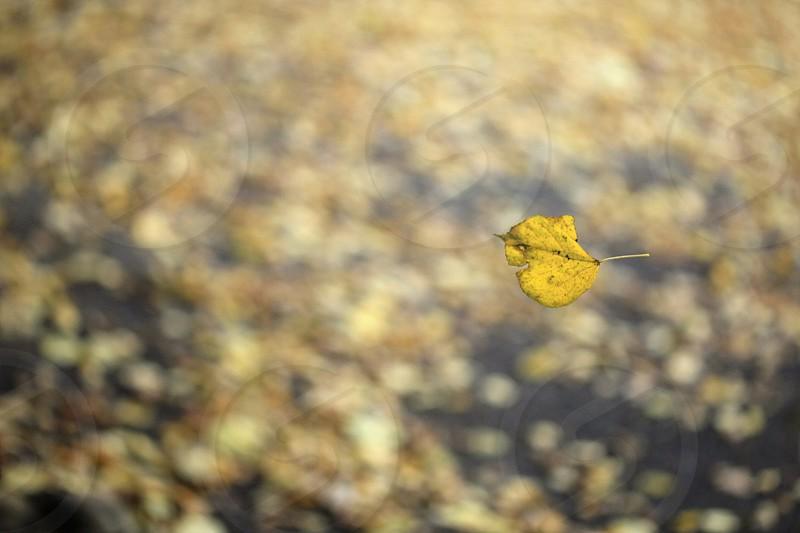 falling leaf photo
