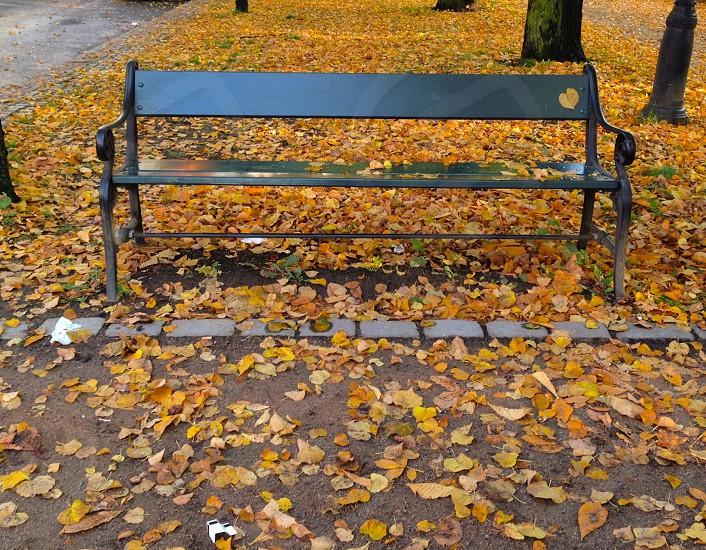 black bench photo