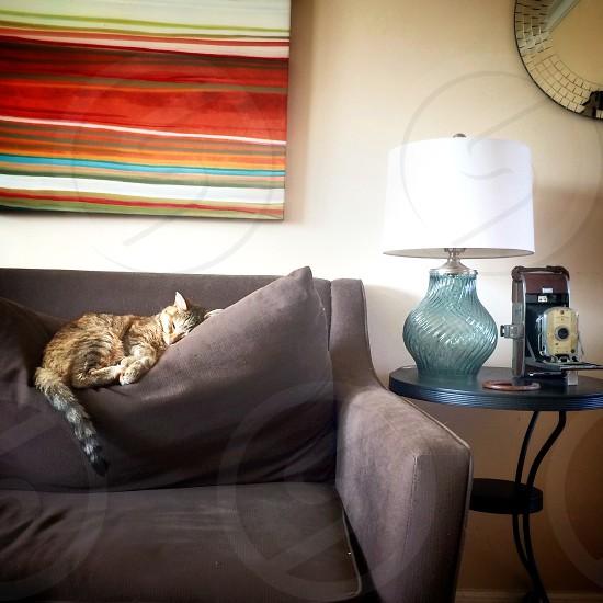 gray tabby cat lying on pillow photo