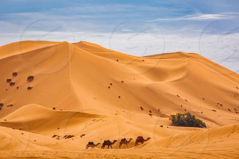 Small caravan in the sand dunes of the Sahara desert near Merzougha in Morocco photo