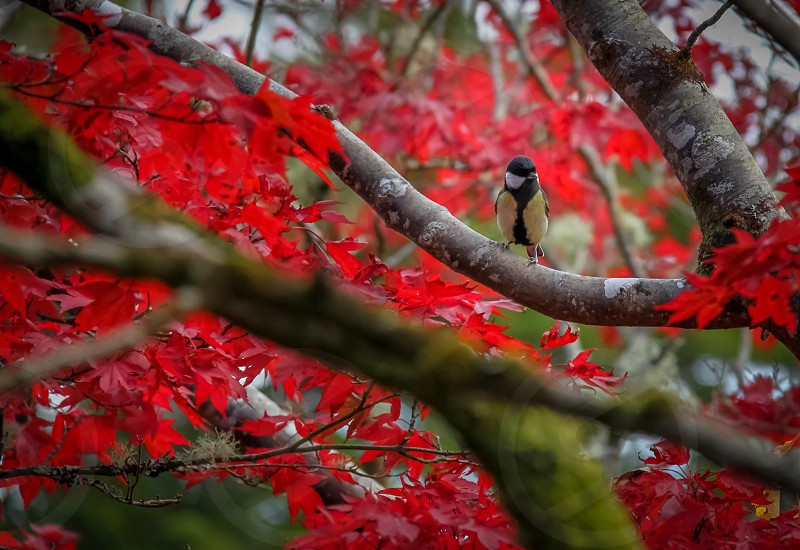 black green and white bird on tree stem of red maple tree photo