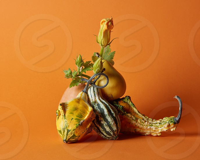 composition of various pumpkins on an orange background photo