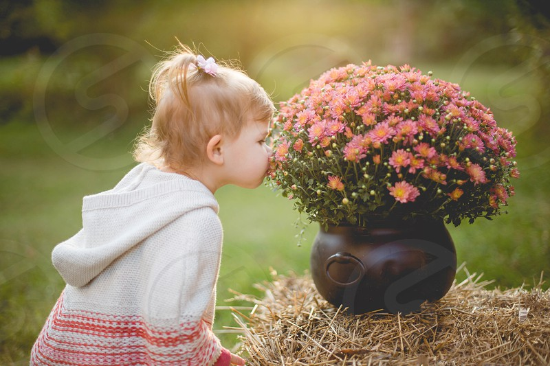 Toddler Girl Smelling Fall Mums photo