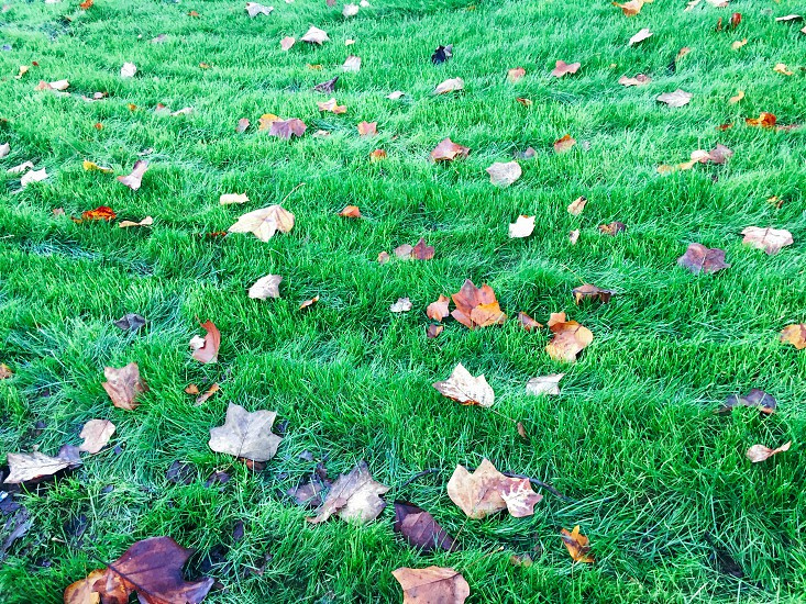fall leaves lying on green grass lawn photo