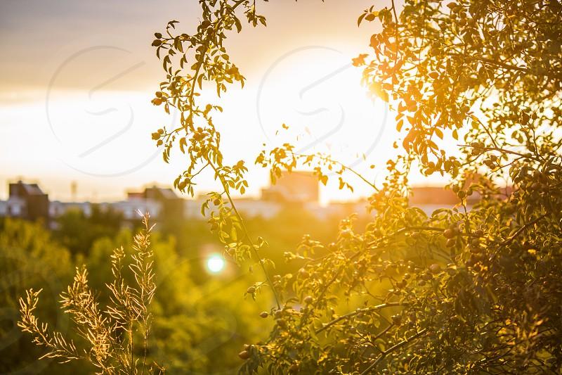 Mauerpark Berlin City summer backlight lifestyle garden green yellow sunset photo