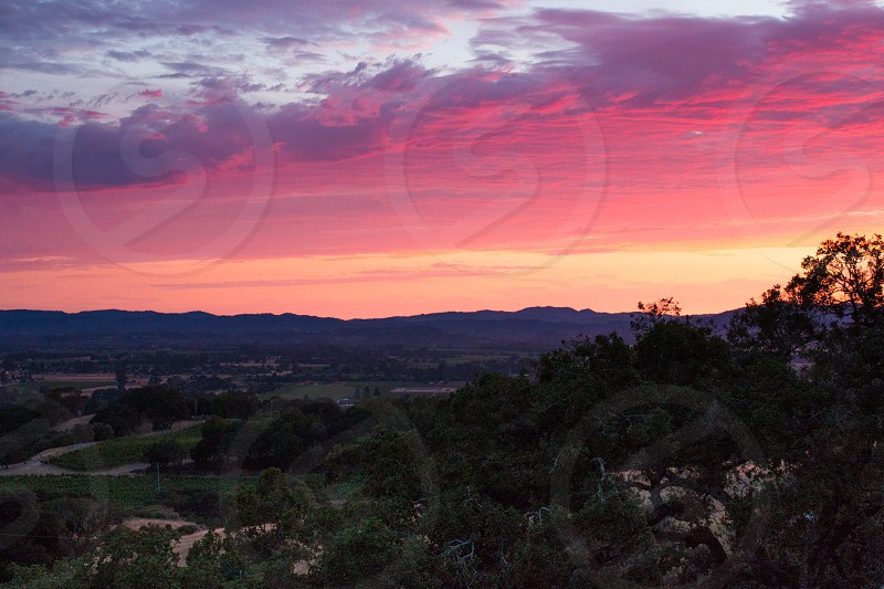 Sunset spring orange pink sunlight beautiful view landscape wine country  photo
