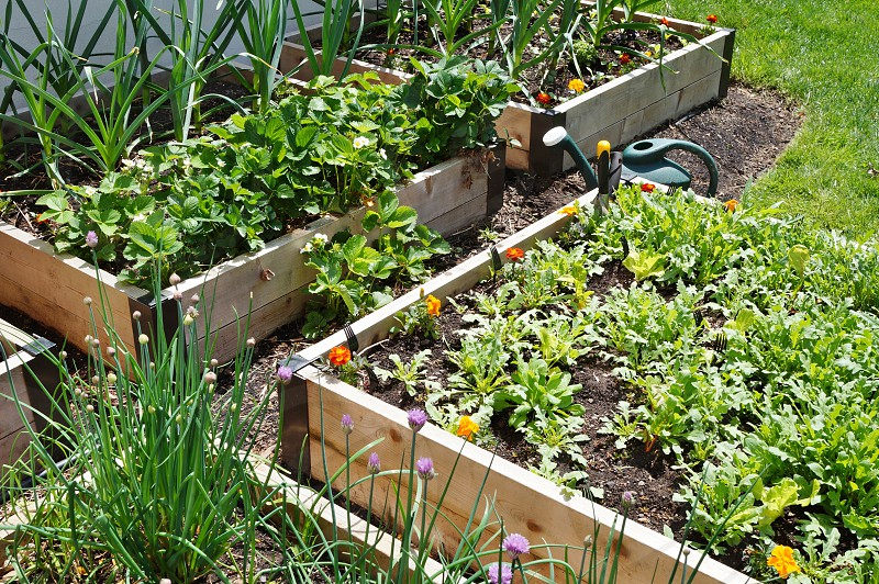 A vegetable garden in raised container beds photo