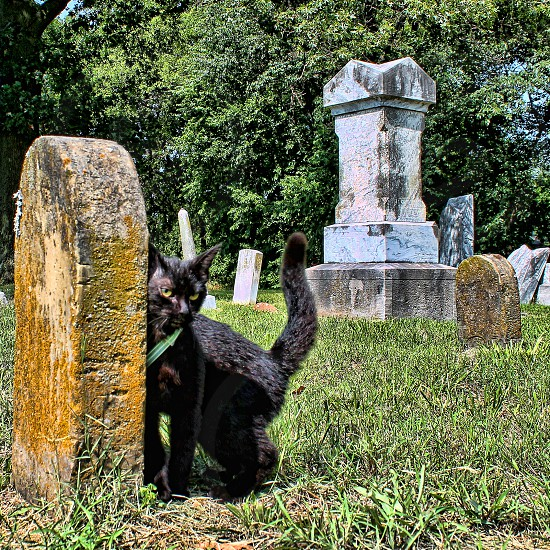 A small black kitten is rubbing against a cemetery tombstone photo