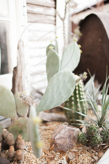 plant photography of cactus on brown soil photo