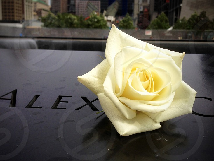 Remember me Yellow Rose at the World Trade Center Memorial photo