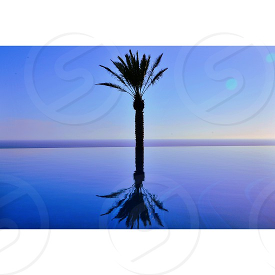 palm tree reflected on glassy water photo