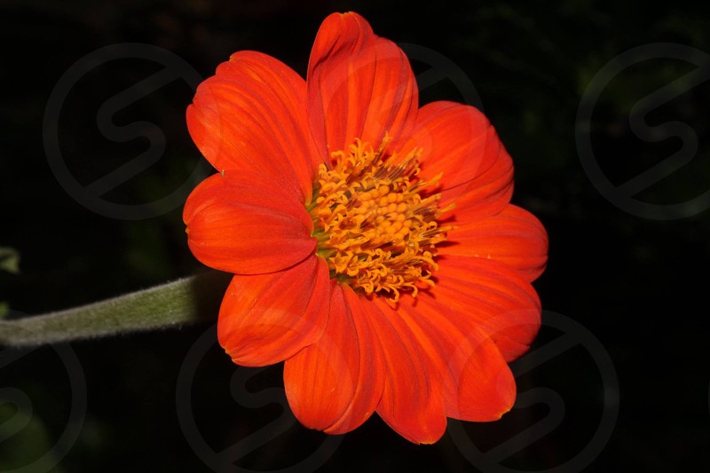 close up photography of red 10 petaled flower photo