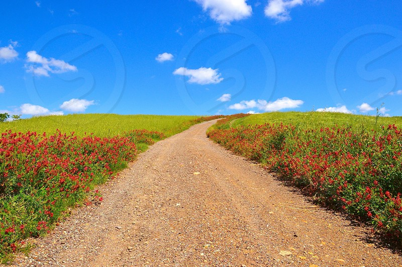 Dirt road Tuscany pienza spring green flowers sky nature landscape clouds colorful peaceful italy countryside travel Val d'Orcia photo