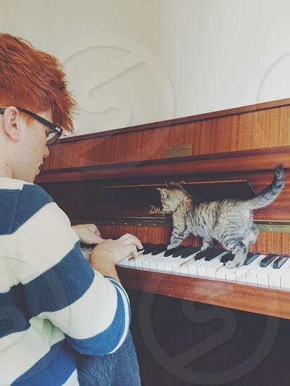 Piano kitten cute duet ginger stripes music cat tabby  photo