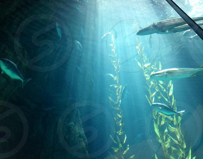 Water fish kelp nature marine life photo