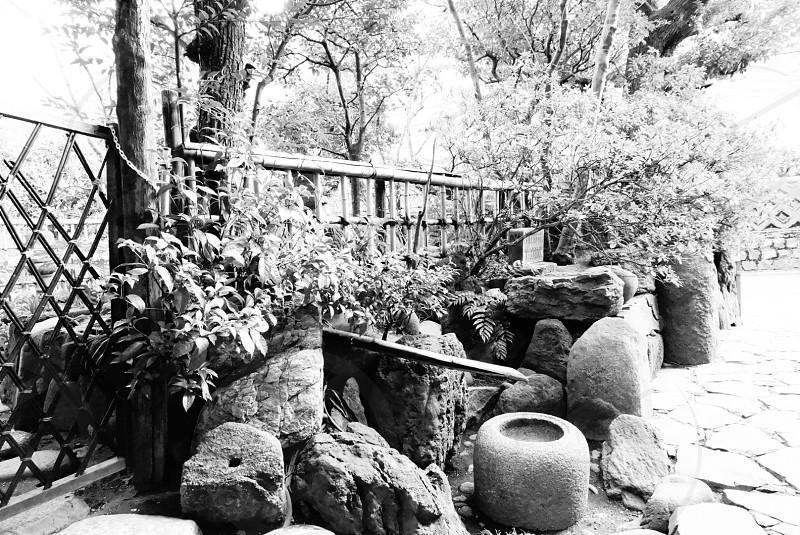 grayscale trees near stones photography  photo