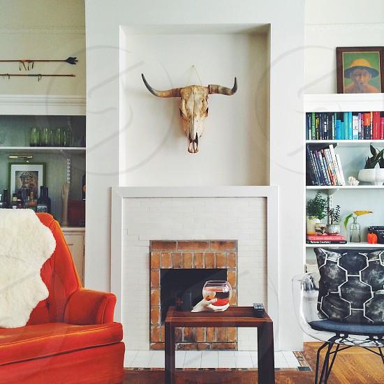 bull skull wall decor photo
