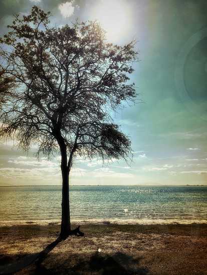 silhouette of tree near body of water photo