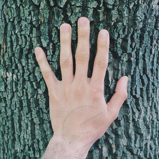 human left hand on tree trunk photo