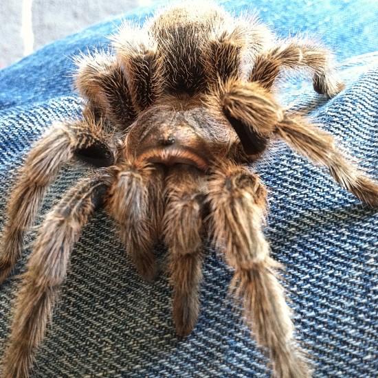Close up of tarantula. photo