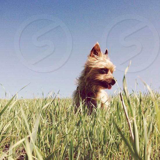 small tan dog photo