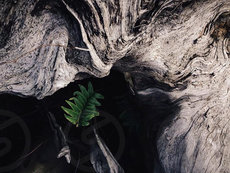 gray wood  photo