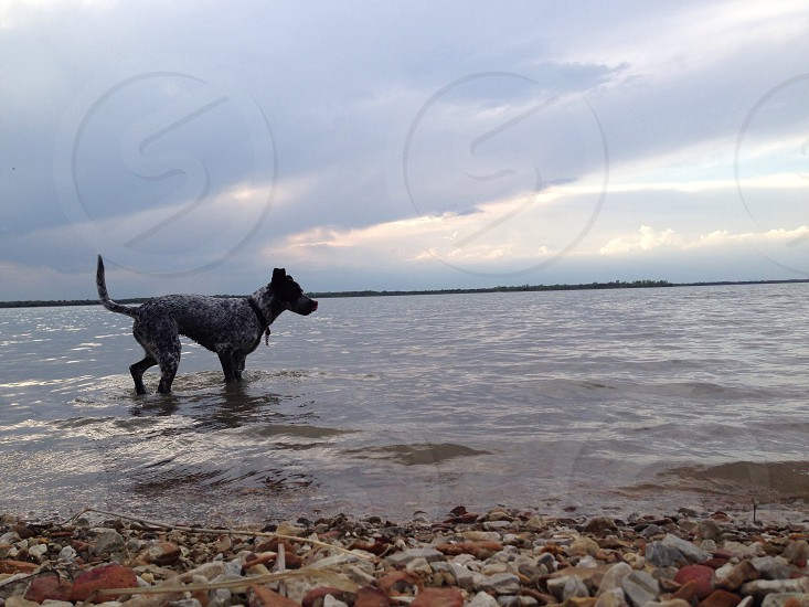 black and white dog on the seashore  photo