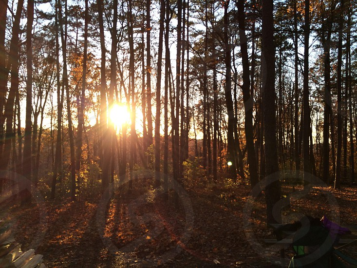 Sunset through a wooded area photo