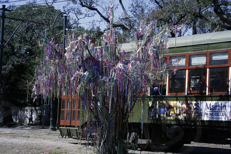New Orleans; Beads; Beads on tree; Streetcar photo