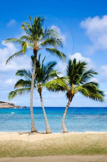 Hawaii travel beach sun palm trees ocean fun vacation  photo