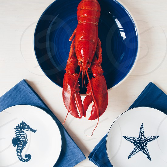 Lobster and the plates photo