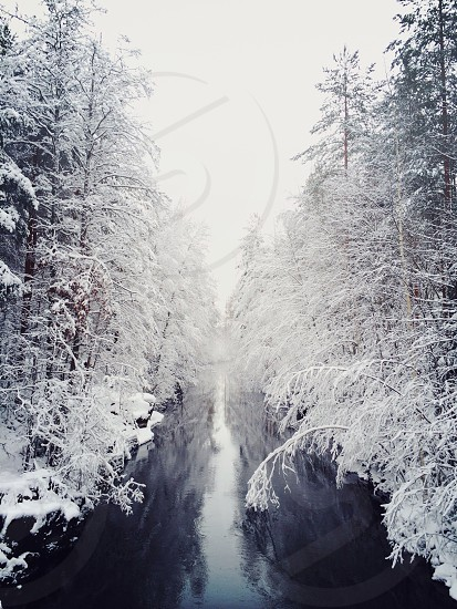 snowy forest photo photo
