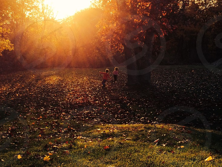 kids running near tree with brown leaves on the floor photo