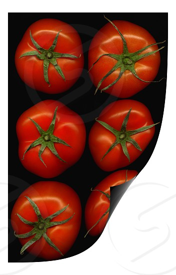 fresh tomatoes on black background curl distortion effect photo