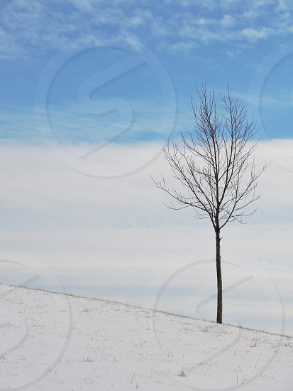 leafless small tree on snowy field under blue and white skies during daytime photo