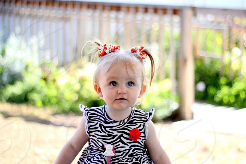 baby's standing wearing zebra designed dress photo