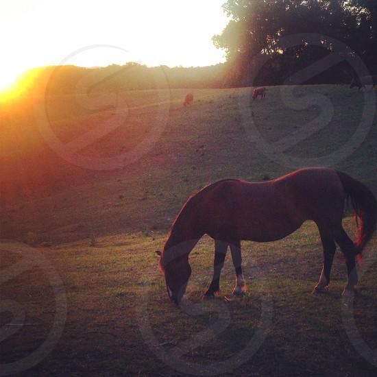 horse at sunset photo