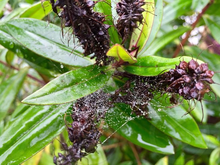 white spiderweb on green plant photo