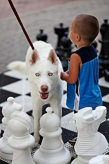 white colored dog photo