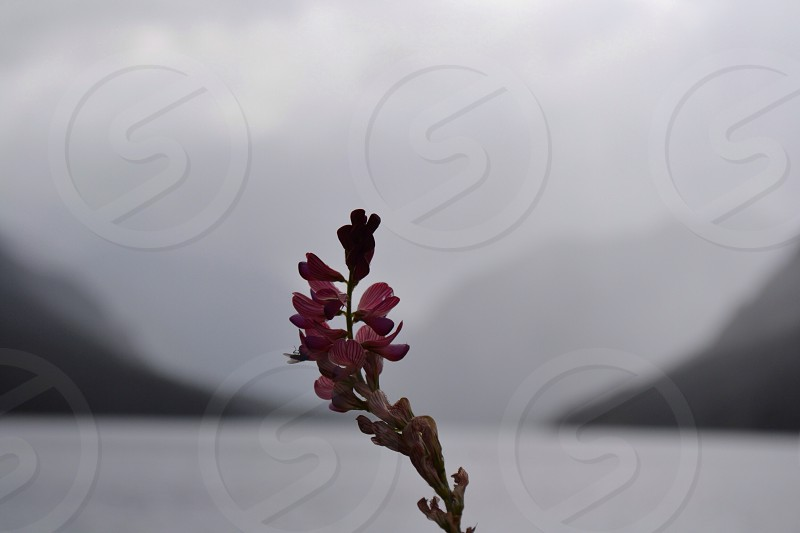 Hills lake flower  photo