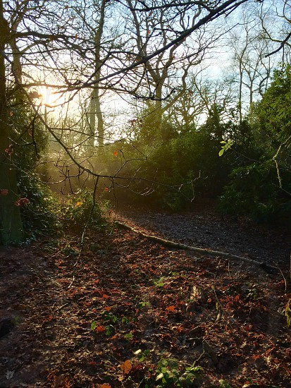 Woodland scene photo