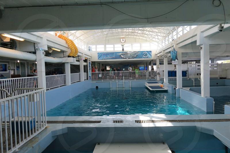 Clearwater Marine Aquarium photo