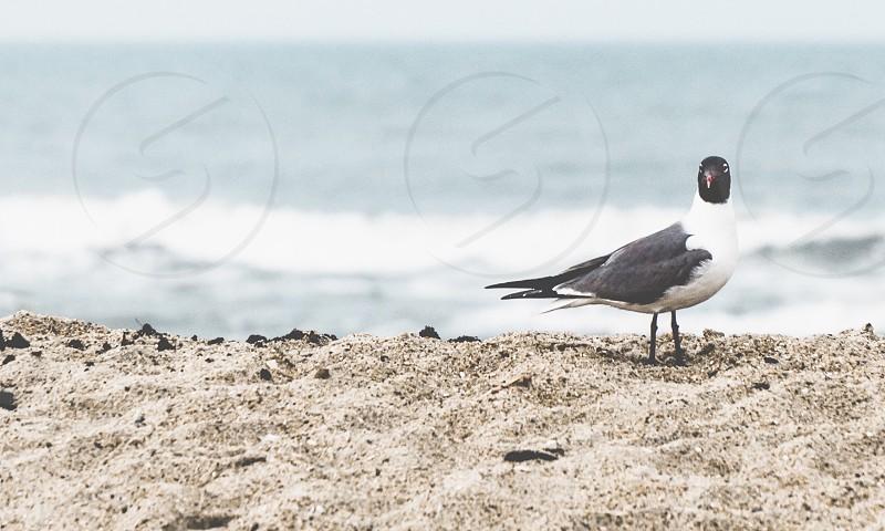 Spring on the beach seagull ocean sand photo