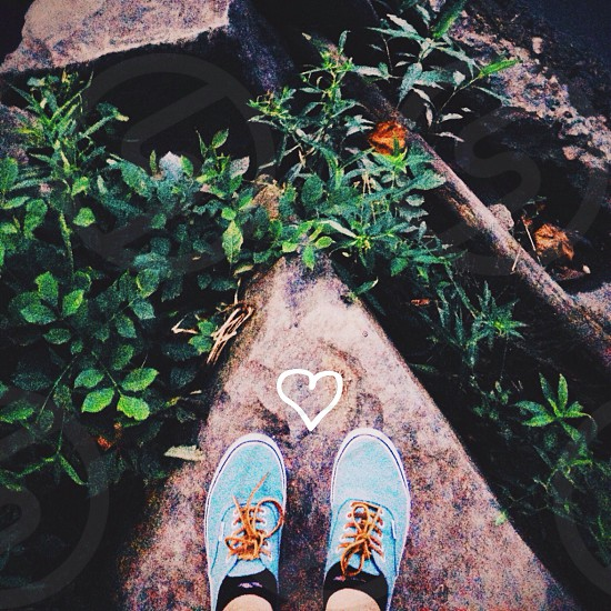blue shoes photo