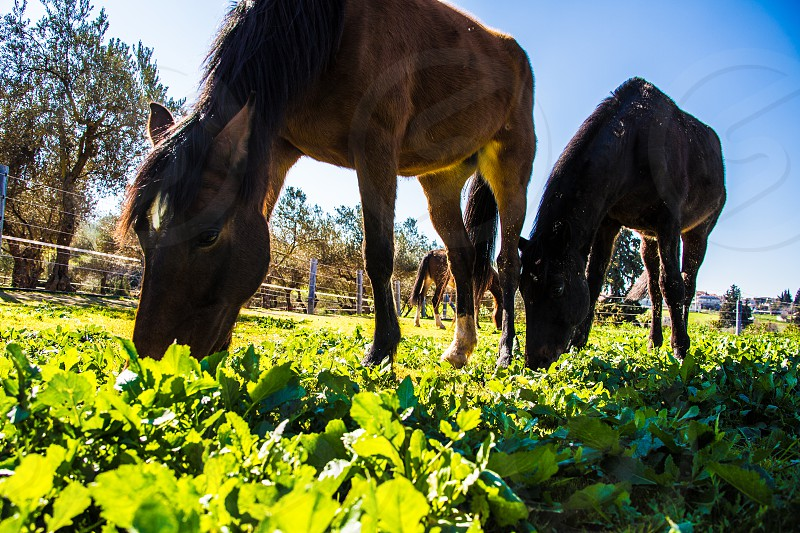 animal beautiful beauty blue brown close eating farm field grass grassland green hay horse mammal nature sunny sunset up warm white young photo