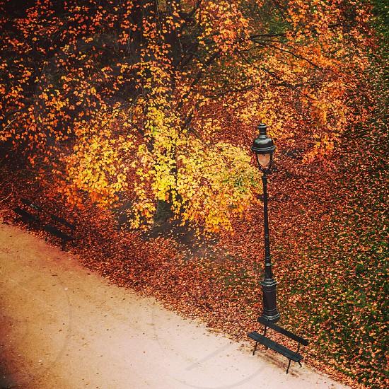 autumn leafs paris park bench photo