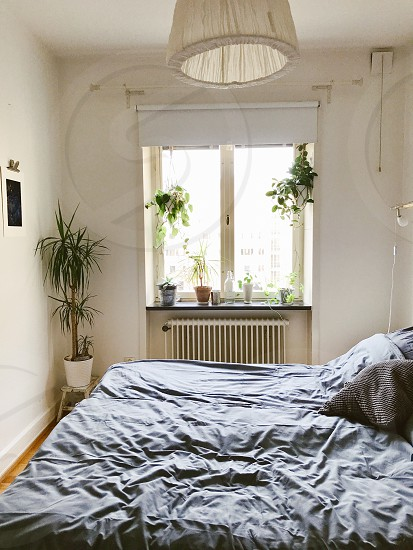 Rent apartment  home building  window bed bedroom  plants potted plants photo
